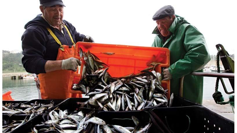 Portugal recebe menos 14 milhões para pescas no próximo orçamento da UE