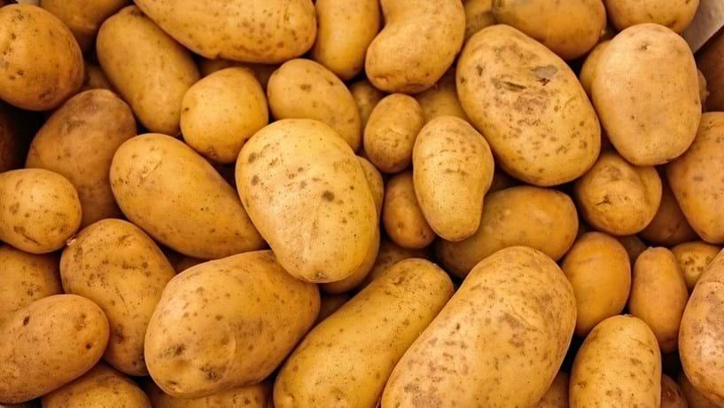 Produção nacional de batata em risco de ser afectada pela traça da Guatemala